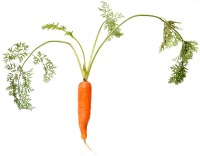 Single large carrot