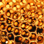What Are The Health Benefits of Honey?