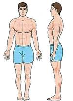 The Mesomorph Body Type