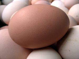 Large fresh country eggs